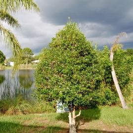 Berry Bush - lake #1