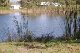 Lake w birds