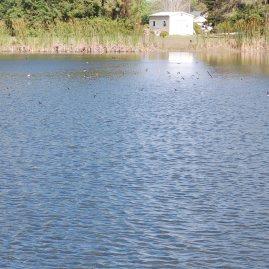 Lake w Flying Martins