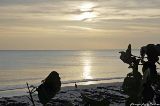 Bird on Manasota Beach- signed jpg (1024x681)