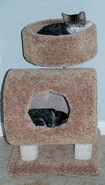 Kitties in Tower  (2) (364x640)