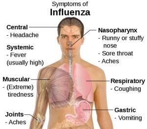 Flu-pic[1]