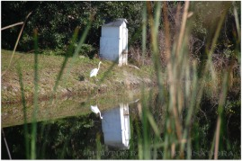 White Egret nead house.web