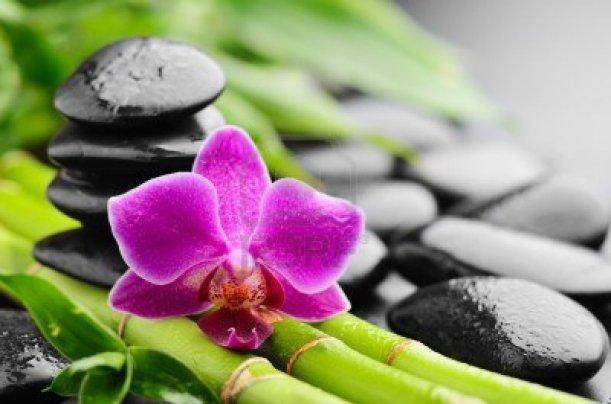 13307999-zen-basalt-stones-and-orchid-with-dew[1]