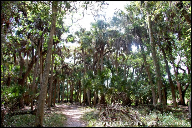 Tree Path.web