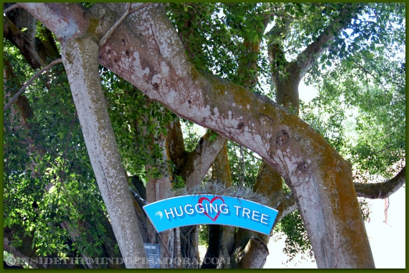 Hugging Tree1.web