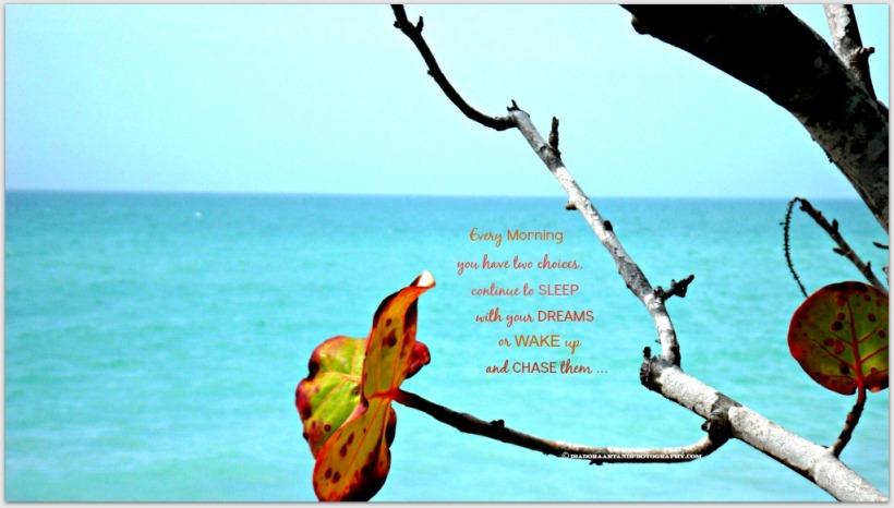 Beach grapevine leaf.web