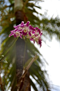 Flower - hazy orchid.web