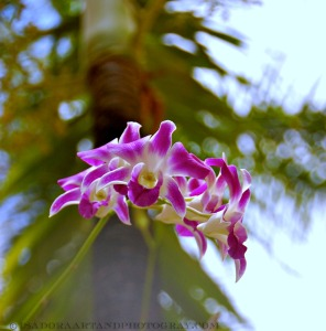 Orchid in Tree.web