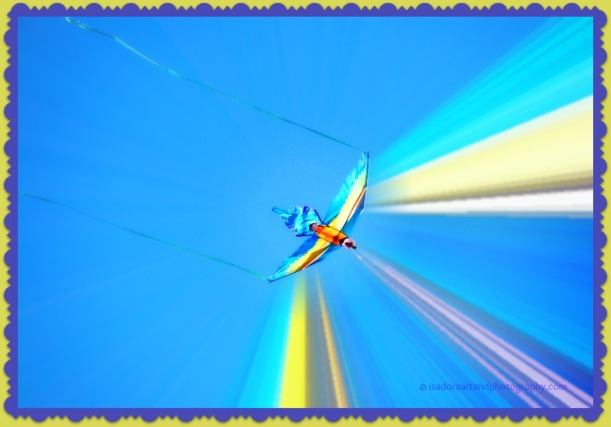 Bird blue kite C.web
