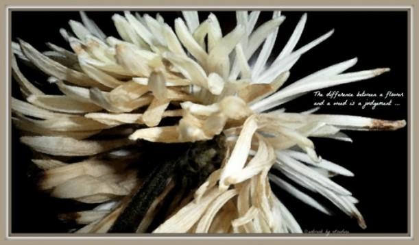 Flower Watercolor 760.web