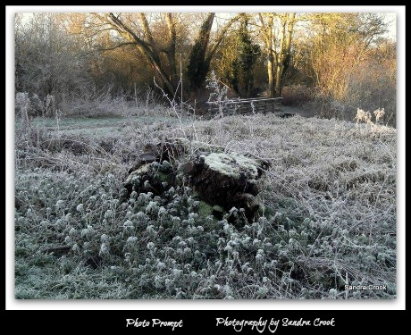 frost-on-a-stump-sandra-crook2.web