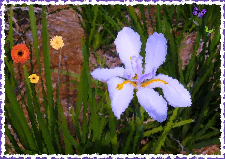 Flower-Purple-760A.web