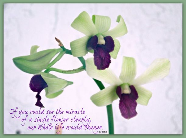 Flower Green Orchid - saying.web