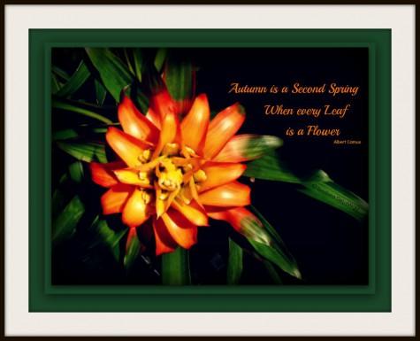 Flower 1024F.web