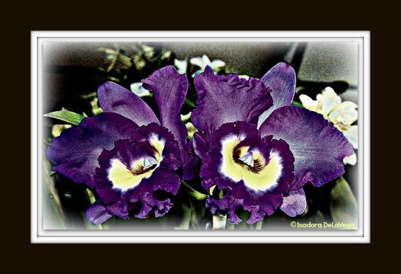 Flower Purple BF 566 Orchid S.web