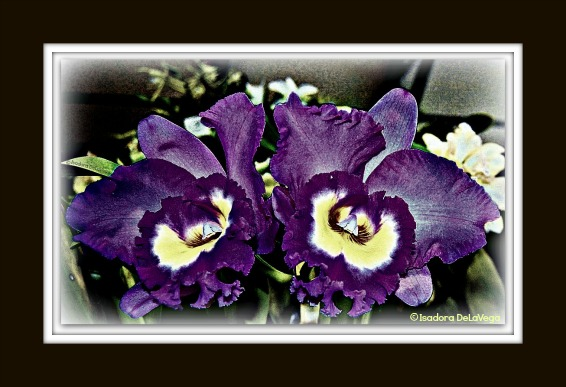 Flower Purple BF 566 Orchid S.web