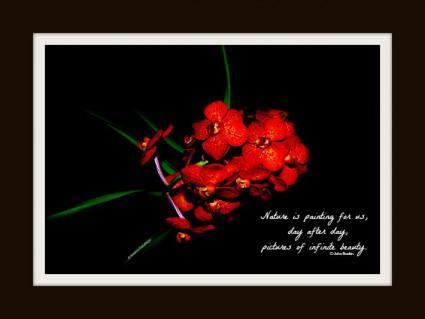 Flower Red Crimson frame 1.web