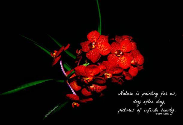 Flower Red Crimson Nurture.web