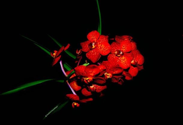 Flower Red Crimson sign.web