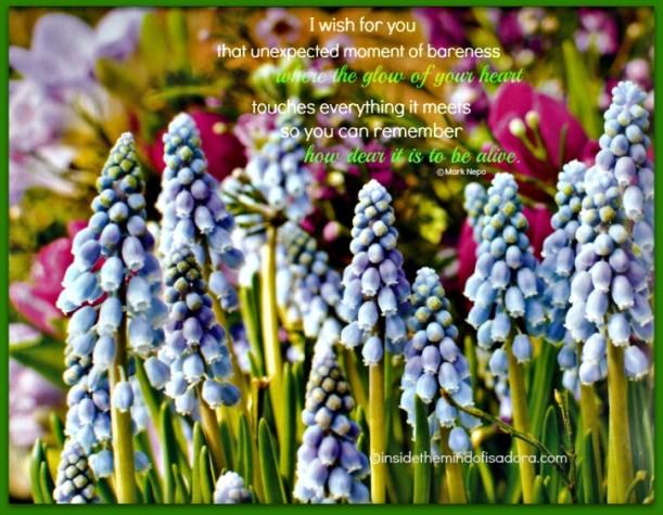 Flowers - January Nurturing Photo.web
