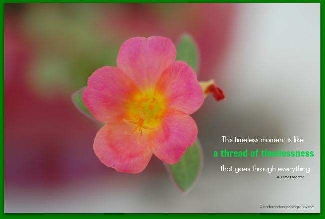 Flower Pink 6-2016 Nurture.web