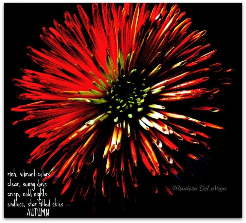 flower-autumn-1024-web