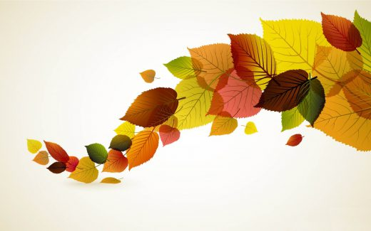 flowers-fall-leaves-4e05b3f03d89458c16c194ce8bb67845