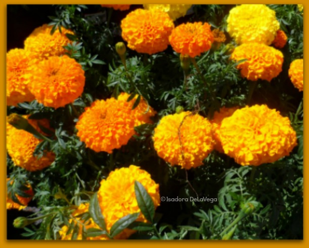 flowers-yellow-611-carnations-web