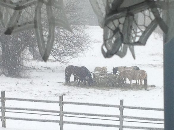 friday-fictioneers-121616-horses-in-snow